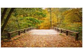 Hillside Nature Trail – Volunteers Needed
